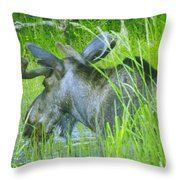 A Bull Moose Wading His Pond Throw Pillow