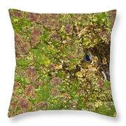 A Bullfrog Rana Catesbeiana Hiding Throw Pillow