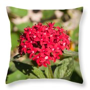 A Bunch Of Small Red Flowers Throw Pillow