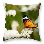A Butterfly Affair Throw Pillow
