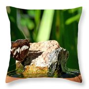 A Butterfly Enjoys A Drink Throw Pillow