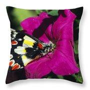 A Butterfly Lands On A Pink Flower Throw Pillow