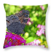 A Butterfly On The Pink Flower Throw Pillow