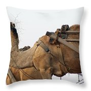 A Camel Foraging For Food In A Desert Environment Throw Pillow