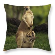A Captive Red Kangaroo Macropus Rufus Throw Pillow