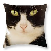 A Cat Throw Pillow