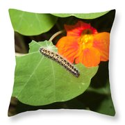 A Caterpillar Eating The Leaves Of A Plant With A Beautiful Orange Flower Throw Pillow