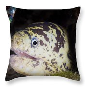 A Chain Moray Eel Peers Out Of Its Hole Throw Pillow