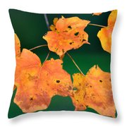 A Change Of Season Throw Pillow