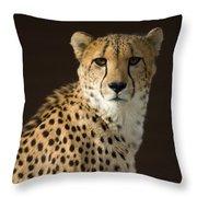 A Cheetah Acinonyx Jubatus Urinates Throw Pillow