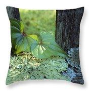 A Cinnamon Vine And Foliose Lichen Throw Pillow