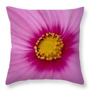 A Close-up Of A Pink Wildflower Throw Pillow