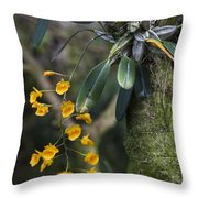 A Close View Of A Beautiful Dendrobium Throw Pillow