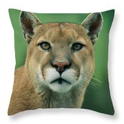 A Close View Of A Captive Male Mountain Throw Pillow