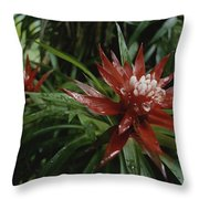 A Close View Of A Tropical, Red Flower Throw Pillow