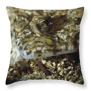 A Close View Of A Well-camouflaged Throw Pillow
