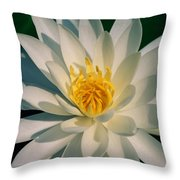 A Close View Of A White Fragrant Water Throw Pillow