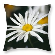 A Close View Of A Wild Daisy Throw Pillow