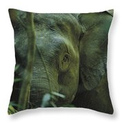 A Close View Of An Asian Elephant Throw Pillow