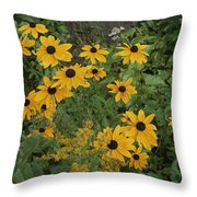 A Close View Of Black-eyed Susans Throw Pillow