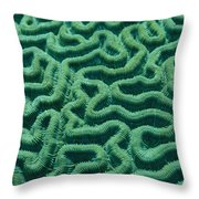 A Close View Of Bright Green Brain Throw Pillow