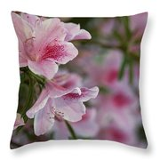 A Close View Of Pink Azalea Blossoms Throw Pillow