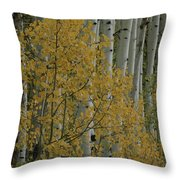 A Close View Of Quaking Aspen Trees Throw Pillow