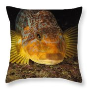 A Close View Of The Face Of A Member Throw Pillow