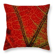 A Close View Of The Veins Of A Colorful Throw Pillow