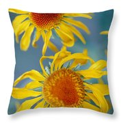 A Close View Of Two Daisies Throw Pillow