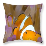 A Clown Anemonefish In A Purple Throw Pillow
