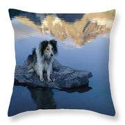 A Collie Perches Itself On A Rock Throw Pillow
