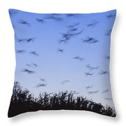 A Colony Of Vulnerable Spectacled Throw Pillow