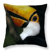 A Colorful Toco Toucans Blue Eye Throw Pillow