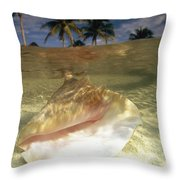 A Conch Shell Rests Beneath The Clear Throw Pillow