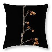 A Crabapple Tree Malus Sylvestris Throw Pillow