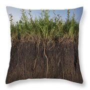 A Cross Section Of A Sunflower Root Throw Pillow