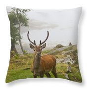 A Deer Stands In A Foggy Meadow By The Throw Pillow
