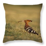 A Eurasian Hoopoe With An Insect Throw Pillow