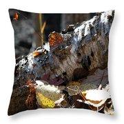 A Fallen Birch Still Claims Its Beauty Throw Pillow