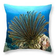 A Feather Star With Arms Extended Throw Pillow