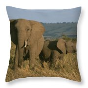 A Female Elephant With Her Baby Throw Pillow