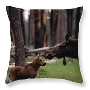 A Female Moose Nuzzles Her  Young Throw Pillow