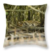 A Female Tiger Rests In The Undergrowth Throw Pillow