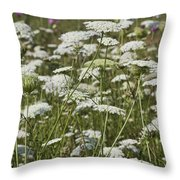 A Field Of Queen Annes Lace Throw Pillow