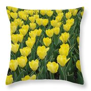 A Field Of Yellow Tulips In Spring Throw Pillow