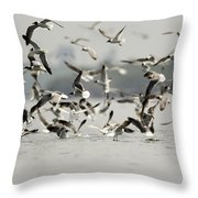 A Flock Of Laughing Gulls Larus Throw Pillow