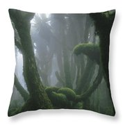 A Fog-enshrouded Rain Forest In Rwandas Throw Pillow