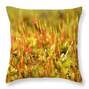 A Forest Of Moss II Throw Pillow