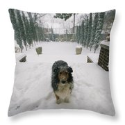 A Forlorn And Snow-dusted Sheltie Throw Pillow